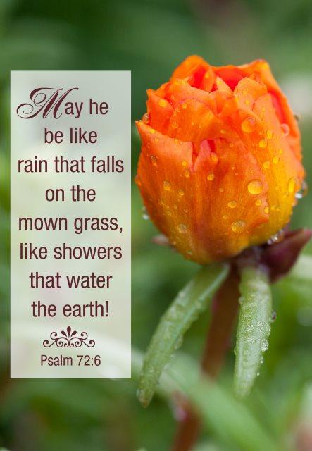 rain that falls